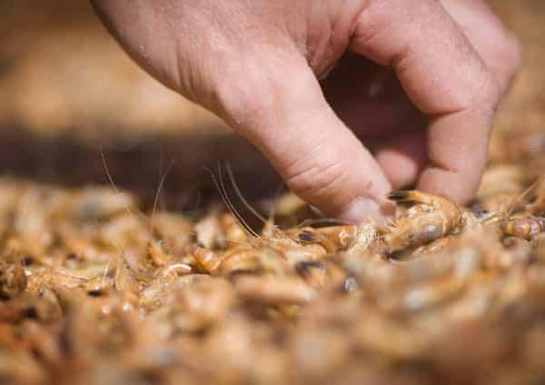 potage aux crevettes